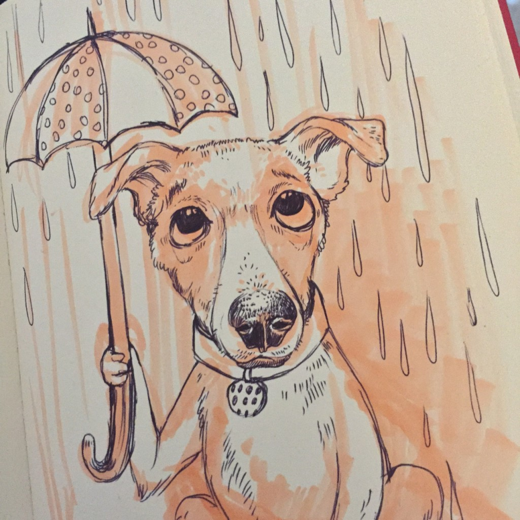 rainy dog